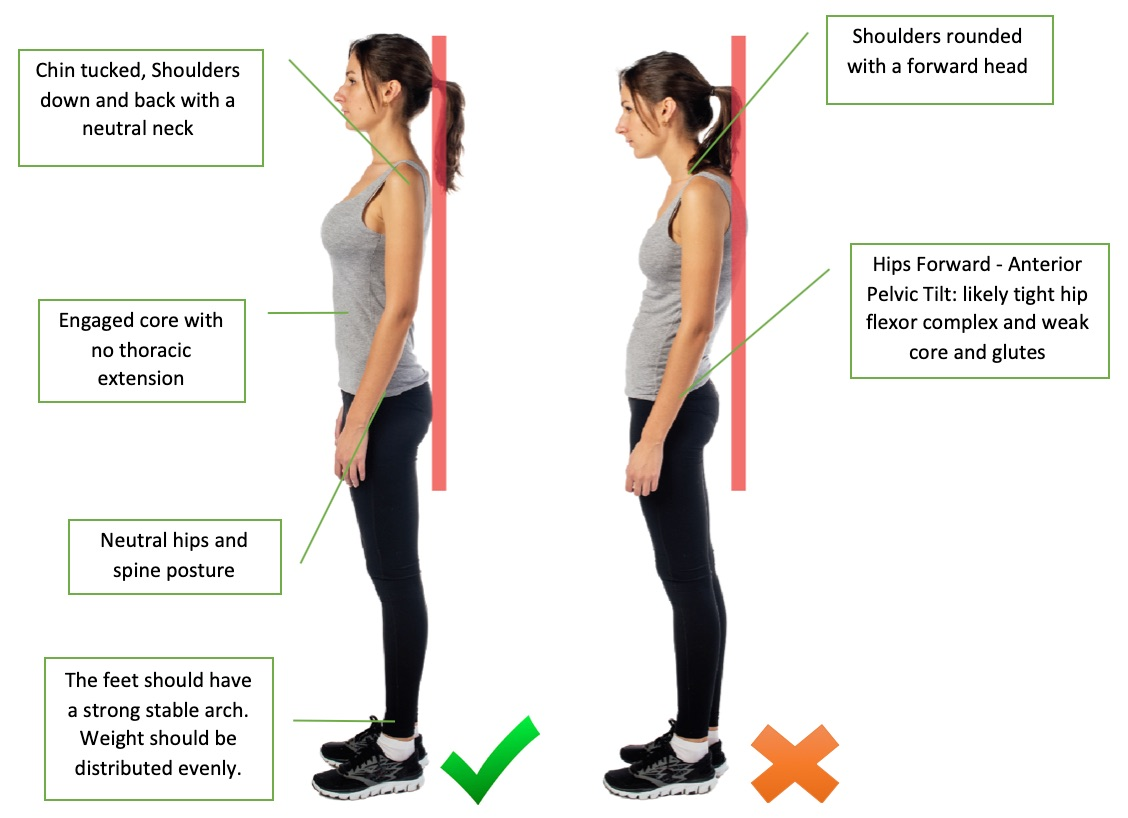 Adult standing and demonstrating good and bad posture